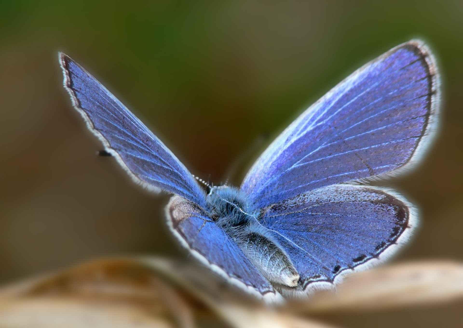 عکس هایی از پروانه های زیبا و رنگارنگ