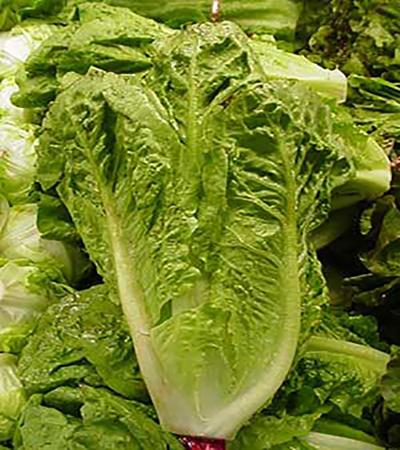 خواص میوه و سبزیجات: کاهوی خواب آور