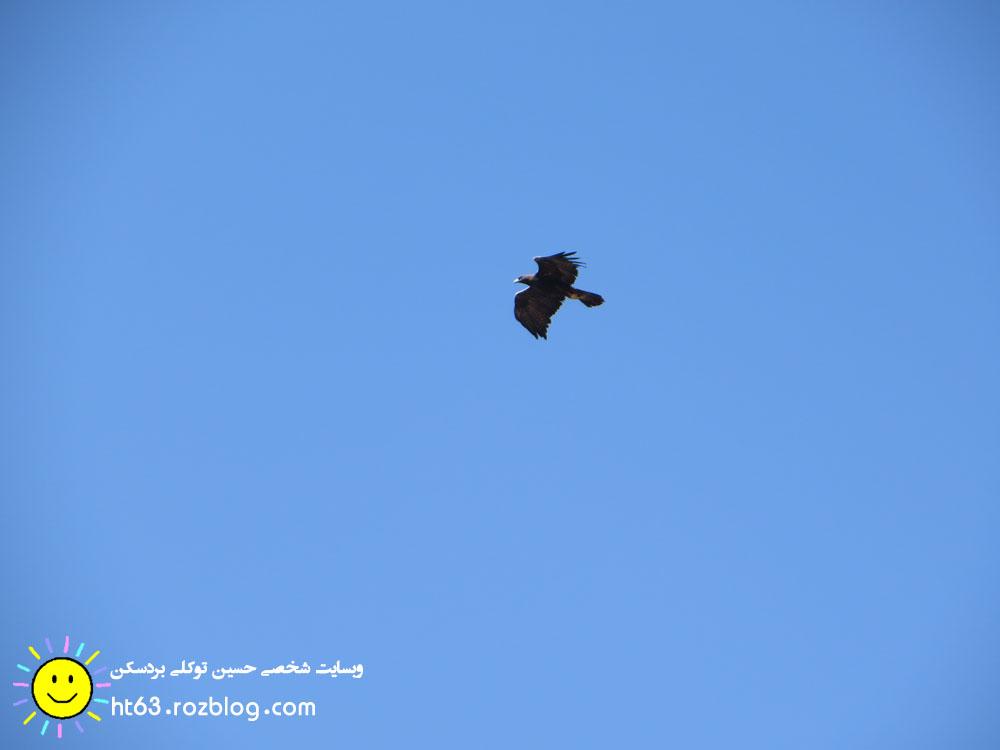 پرواز عقاب