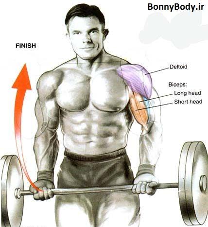 تمرینات بازو