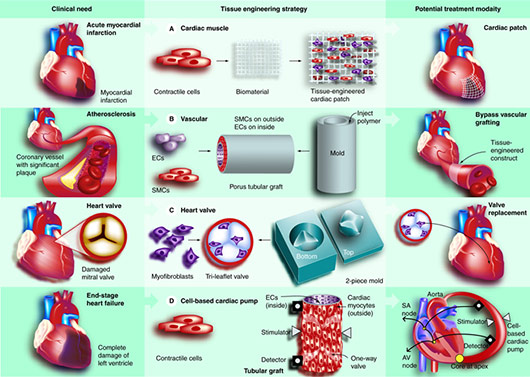 Heart Valve Tissue Engineering
