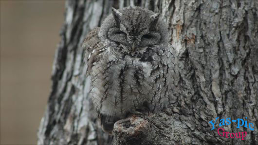 http://s5.picofile.com/file/8145799600/owl_camouflage_examples_06.jpg