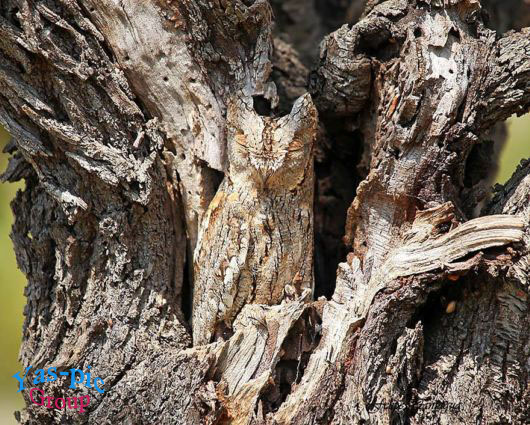 http://s5.picofile.com/file/8145799676/owl_camouflage_examples_14.jpg