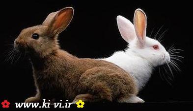 همه چیز درباره خرگوش ها