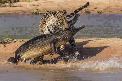 عکس جالب از دنیای حیوانات