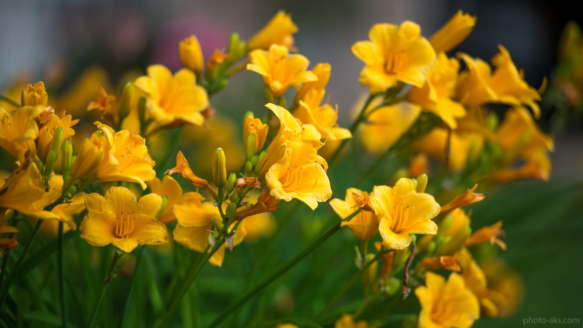 http://s5.picofile.com/file/8146752226/lily_flowers_wallpaper.jpg