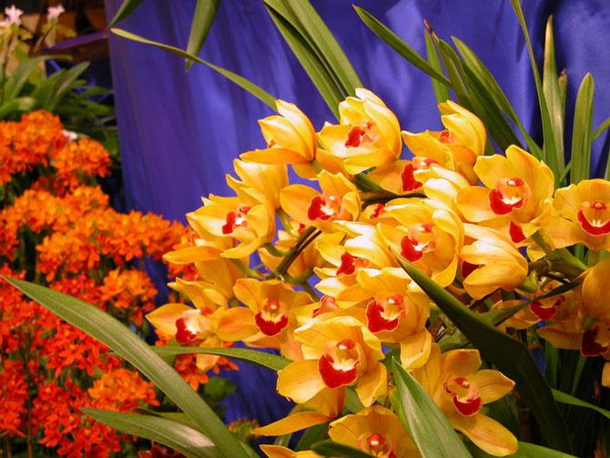 عکس زیباترین گل های طبیعی جهان