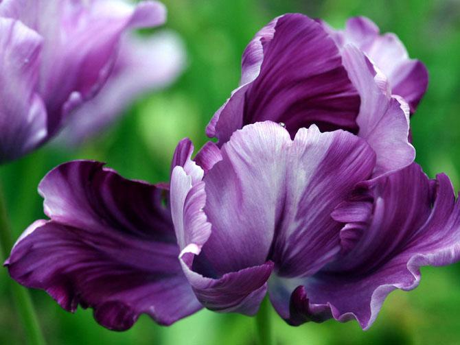 تصاویر گل های طبیعی خیلی زیبا  http://afghanistan-girl.blogsky.com/tag/%DA%AF%D9%84
