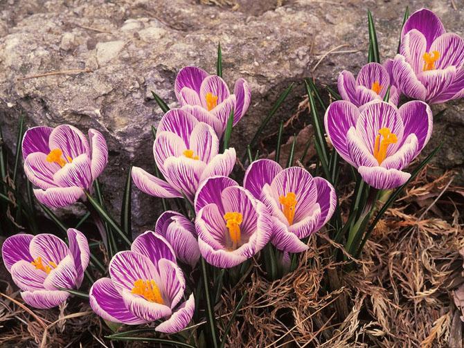 قشنگ ترین گل های طبیعی