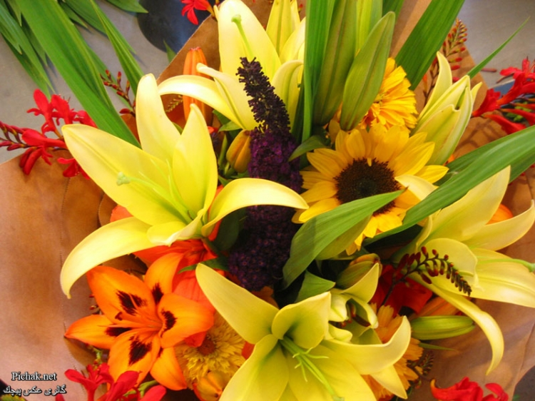 زیباترین گل های طبیعی جهان  http://afghanistan-girl.blogsky.com/1392/01/12/post-63/Pictures-of-beautiful-flowers  Beautiful fresh flowers around the world