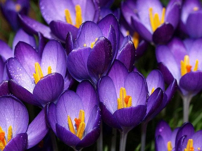 عکس گل های زیبای دنیا