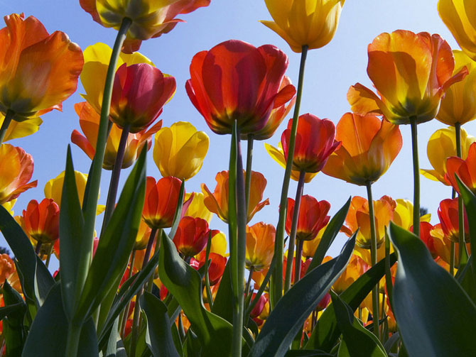 زیباترین گل های دنیا