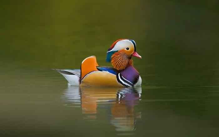 عکسهای از پرندگان خیلی زیبا