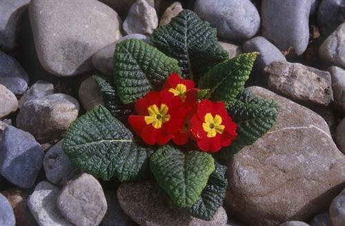http://s5.picofile.com/file/8148153818/flower_stones_2.jpg