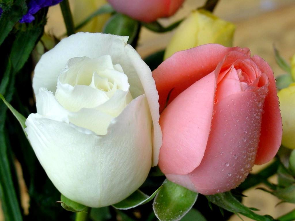عکس گل طبعیی