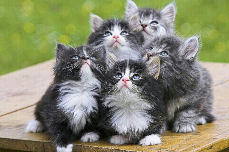 عکس گربه های خوشگل و جذاب