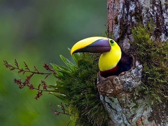 http://bayadedaykondi.persianblog.ir/post/160/ عکس پرندگان زیبا