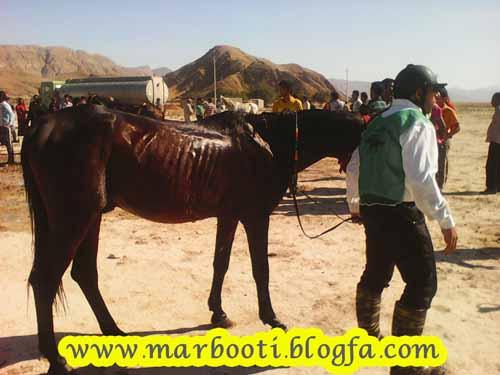 http://s5.picofile.com/file/8150157918/asbsavari_evaz_16_aban_93_3_.jpg
