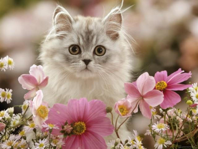 عکس های جالب از بچه گربه های ناز