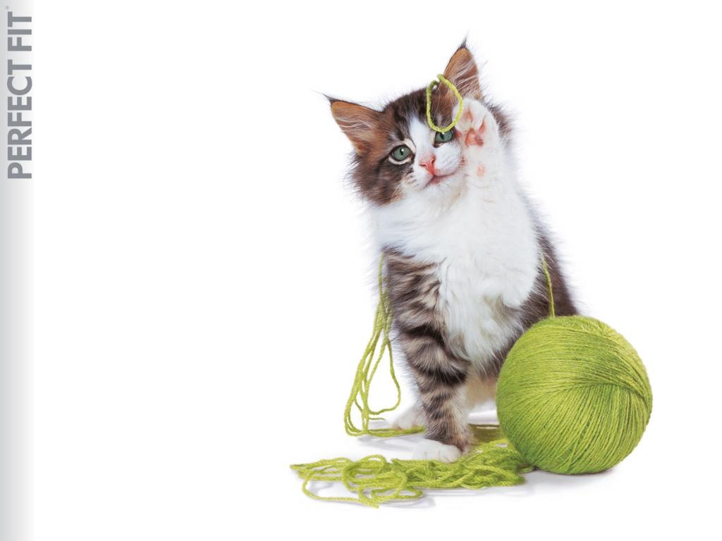 عکس بچه گربه خیلی خوشگل