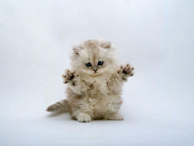 عکس بچه گربه های باحال ملوس Cute kitten Pictures