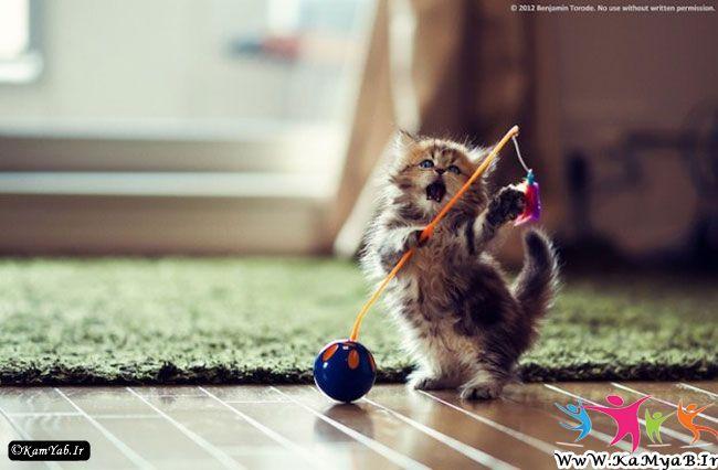 عکس زیباترین بچه گربه دنیا Cute kitten Pictures