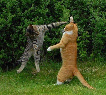 عکس های جالب و خنده دار گربه ها