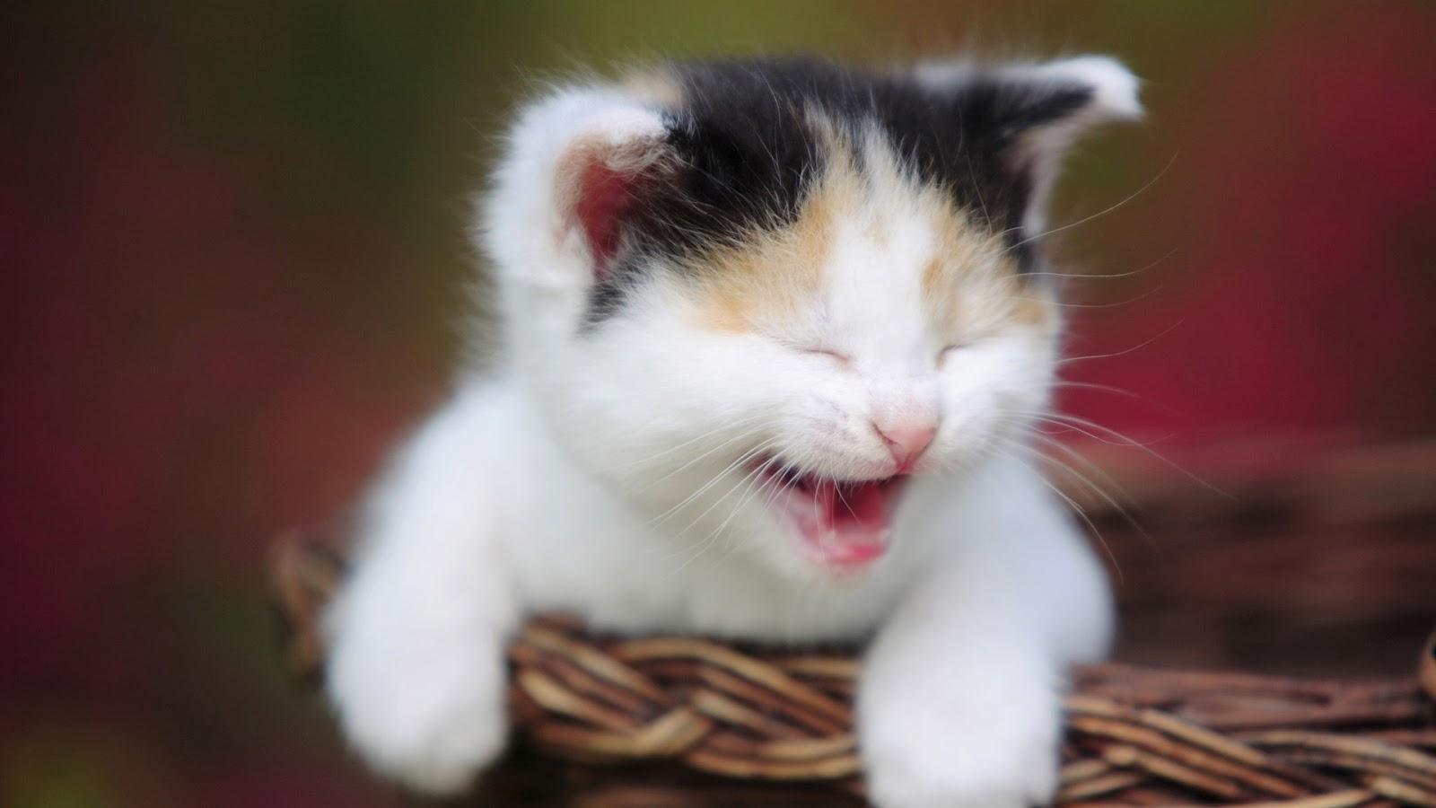 عکس پیشو ناز+گربه های بامزه