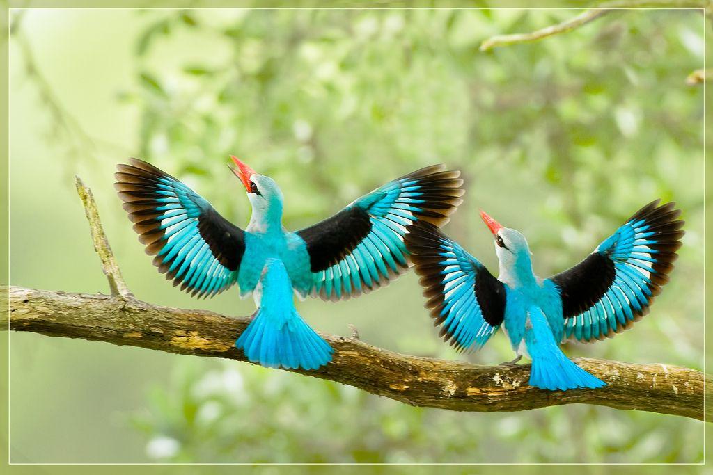 beautiful_birds زیباترین پرندگان جهان