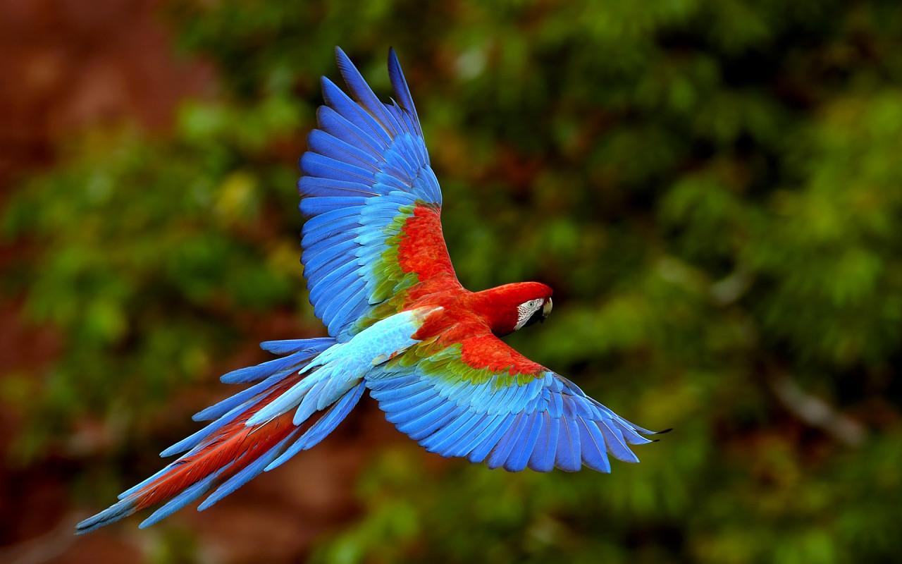 Beautiful_bird_wallpaper_for_desktop