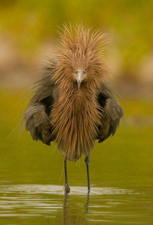 عکس جالب و خنده دار حیوانات