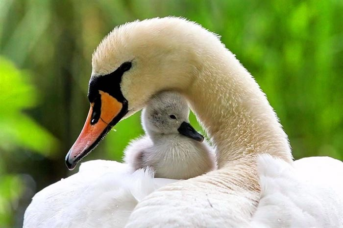 عشق مادرانه