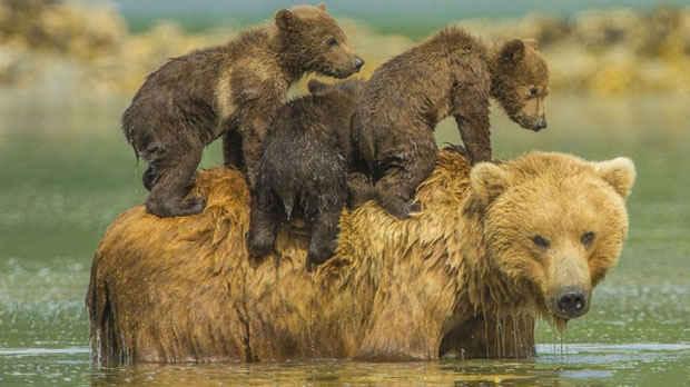 عکسهایی دیدنی و ناب از دنیای حیوانات