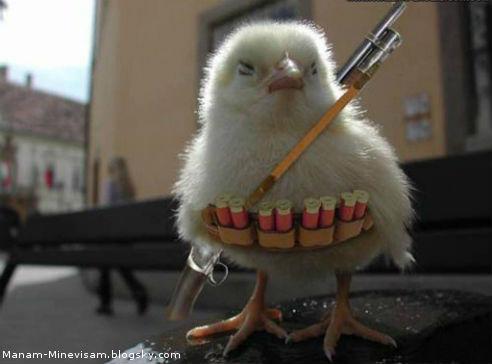 اطلاعاتی در مورد مرغ و صنعت مرغ داری که احتمالا نمیدوسنیتد