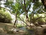 طبیعت گردی بردسکن ( جنگل کاسف )