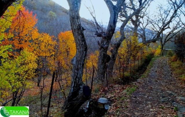 منظره پاییز روستا