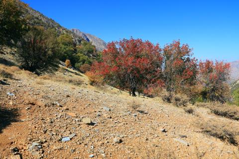 کوه خامی