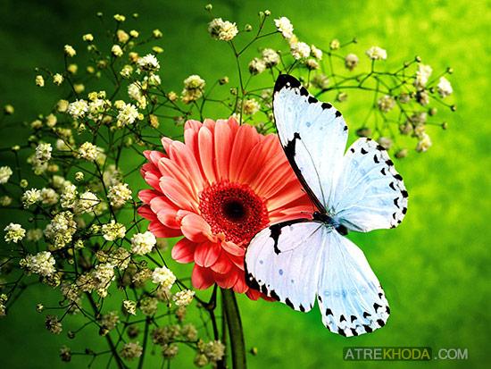 به دنبال خدا - ویرجینیا ال کرول - عطر خدا www.atrekhoda.com