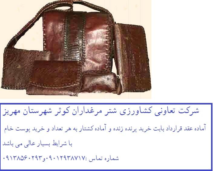 شرکت تعاونی شتر مرغداران کوثر شهرستان مهریز