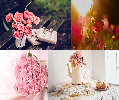 قشنگترین و زیباترین عکس ها از زیباترین گل ها با کیفیت بالا