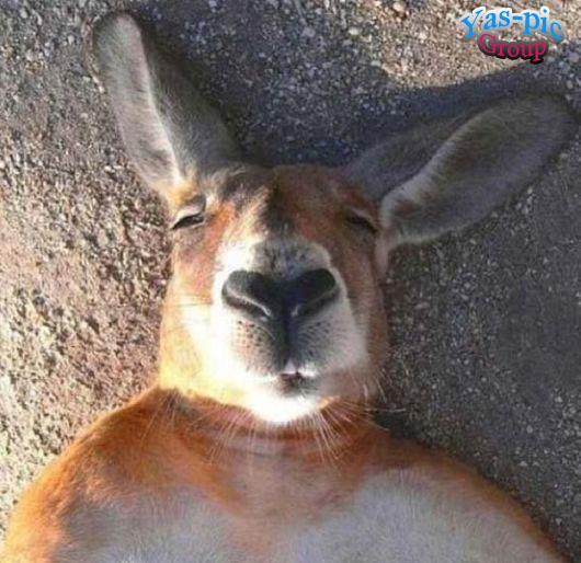 http://s5.picofile.com/file/8160256676/animal_selfies_funny_03.jpg