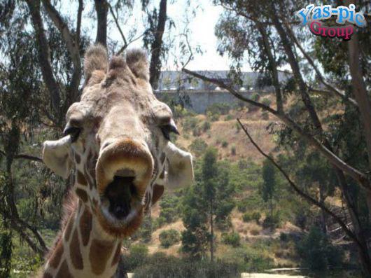 http://s5.picofile.com/file/8160256700/animal_selfies_funny_06.jpg