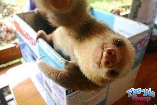http://s5.picofile.com/file/8160256784/animal_selfies_funny_08.jpg