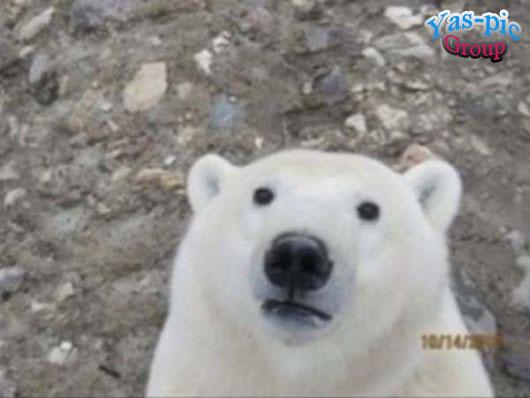 http://s5.picofile.com/file/8160256900/animal_selfies_funny_16.jpg