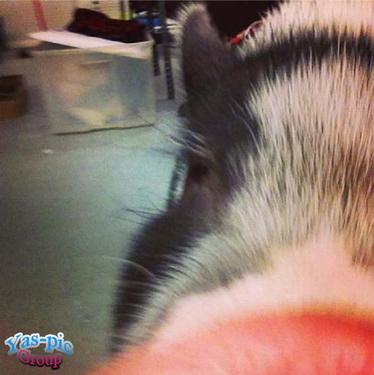 http://s5.picofile.com/file/8160256992/animal_selfies_funny_13.jpg