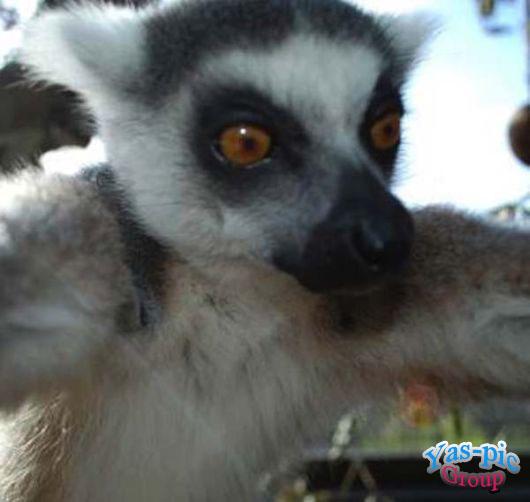 http://s5.picofile.com/file/8160257018/animal_selfies_funny_12.jpg