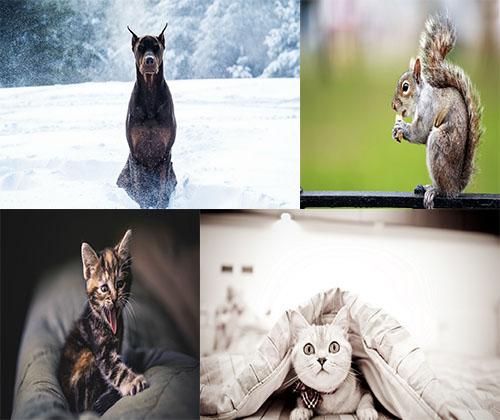 دانلود جدیدترین و بهترین عکس های فوق العاده زیبا از حیوانات