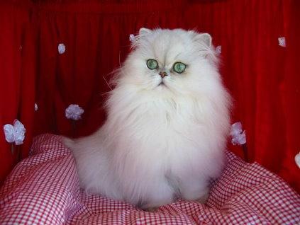 http://s5.picofile.com/file/8160890118/persian_cat.jpg