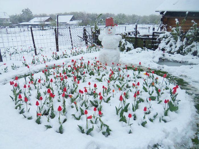 آدم برفی و باغچه ی لاله
