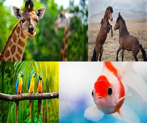 والپر های فوق العاده زیبا از حیوانات